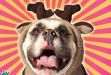 Best Dog Sweaters Of Winter 2012-13