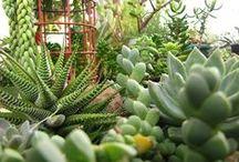 cactus&suculentas&crasas / by COLDOS&BARRIOS