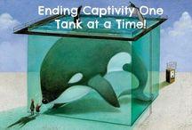 Captivity Kills! / by Rebecca Levick