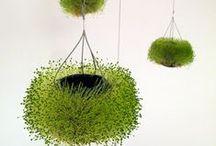 verdes / plantas