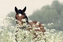 Meadow Wildlife