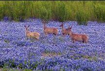Nature's Blue Haven