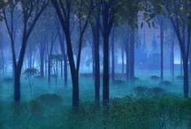 Dark Night Forest