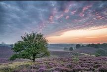 Beauty of the Moor
