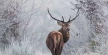 Winter on Deer Mountain
