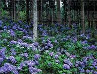 A Woodland Garden