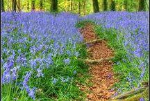 Purple Country Walk