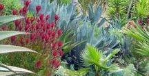 water wise Mediterranean gardening