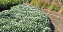 lawn replacement, ground covers and mulch / What could replace a lawn: other soft surfaces for playing on, ground covers of various heights, calming horizontal vegetation, hard surfaces, mulches, living mulch and green manures, edible green carpet plants