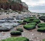 Seaweed Shores