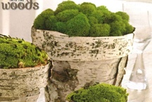 Moss is beautiful!