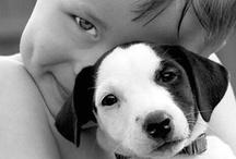 ANIMALS / Animals | Dieren