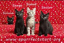 rescue animals / wonderful rescues in need of loving homes. Cats and Kittens and adoptable pets.