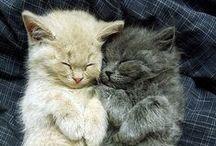 Cats♥ / Big Cats Small Cats ♥