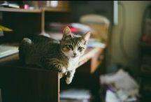 Cats ^^