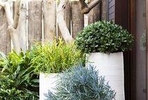 Jardin / Exterieur