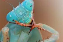 Насек)) Insects / макрофото -насекомые, цветочки и т.д