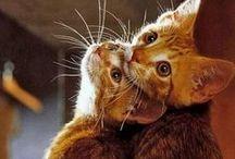 Котэ Kitties