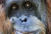 Родня))) Monkeys / все макаки мира)))