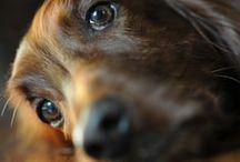 Собаки Dogs / верные друзья)