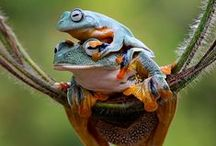 Лягухи Frogs / лягущенции