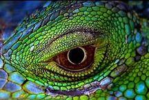 Рептилка Reptiles / крокодилы и прочая страсть)