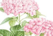 Рисованные цветы Painted Flowers / рисованные цветы