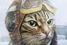 АртКотэ Cat art / кошки-повод для вдохновения)