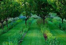 огород garden