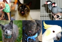 #ShelterSunday / Twice a month we feature #DC area adoptable pets on our blog in a big #ShelterSunday post. Then, we come over here and share! Which one of these pet pals do you want to take home with you?