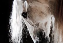 Horses / by Lisa Cavera