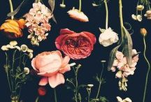 Blooms and Botanicals