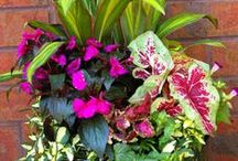 Container Gardening / Beautiful containers overflowing with flowers and foliage. / by Barbie Mix