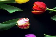 Flower collection / Fotografie di fiori