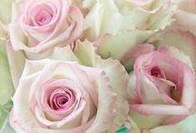 Romantische Rosen Photogarfien Vintage / wunderschöne Rosenfotografien zur Inspiration gefunden im Net