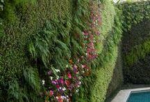 Tuin - Garden - Jardin