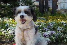 Teresa Floro/ Mascotas  / Fotografías de mi mascota. Con mi perra he realizado el curso básico de adiestramiento de perros impartido por la Unidad Canina de la Policía Local de Estepona.