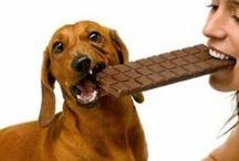 Perros  / Fotografías divertidas y adorables de perros.