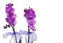Çiçek Gönder / Çiçek vitrini ile sevdiklerine kır çiçekleri, şebboylar, orkideler, buketler ve çiçek sepeti aranmaları gönder. Çiçek gönder sayfamız ile kolay ve ucuz çiçek gönder http://www.cicekvitrini.com/cicekler/cicek-gonder