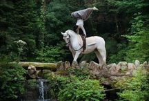 Horse Vaulting / by Deanna Fagerness