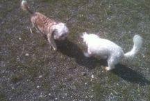 Doggies / Pets pets pets
