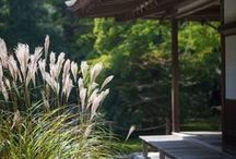 My Japanese garden obsession