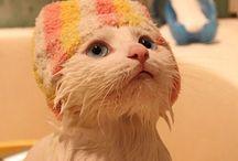 CUTE PICS / Cat Love