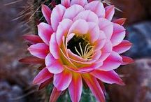 Flowers, Plants & Scapes