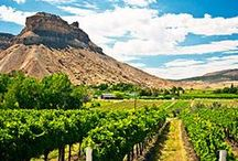 Vineyards outside of California / Galleano Winery is located in Southern Ca, if you don't live near CA we are sad we don't get to see you but will hope you come down to visit us sometimes soon. Check out the board to view a few vineyards that are located outside of CA.