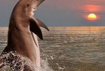 ♆ Dolphins ♆ / beautiful....<3