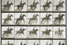 Eadweard J Muybridge
