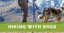 Hiking with Dogs / We love hiking with dogs and find the best dog-friendly trails around the globe.