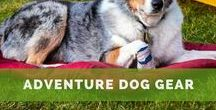 Adventure Dog Gear / Must-have gear for your adventure dog. Camping gear, biking gear, and outdoor gear for your pup.