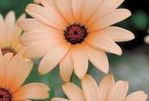 Μy.....flowers